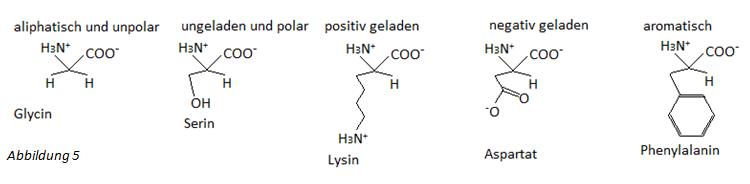 Aminosäuren in Gruppen