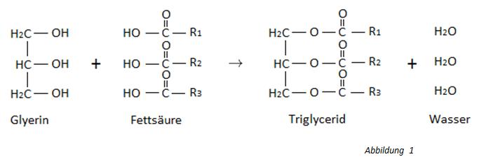 Chemie Der Lipide Fettesäuren Aufbau Herstellung