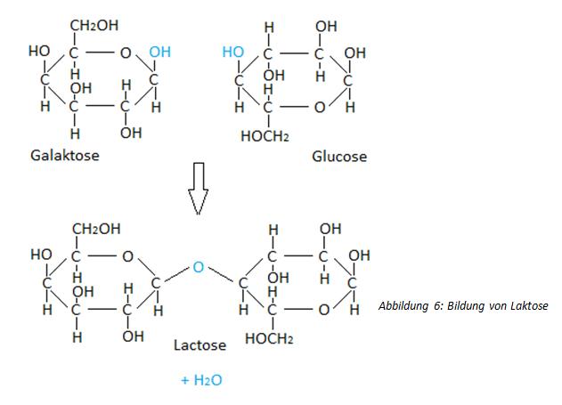 Reaktion der Laktose